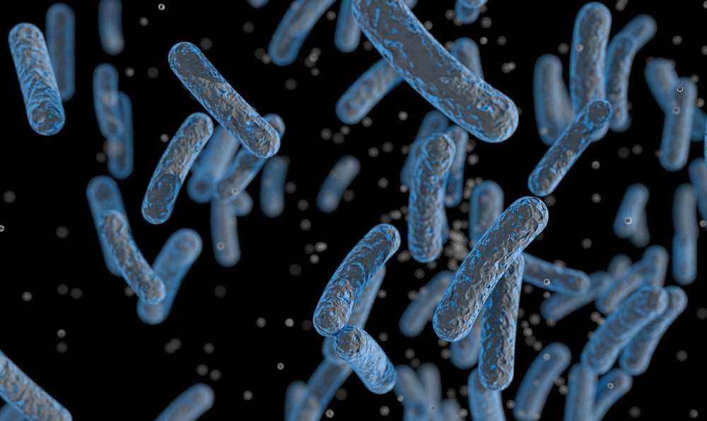 tasarlanmis bakteriler