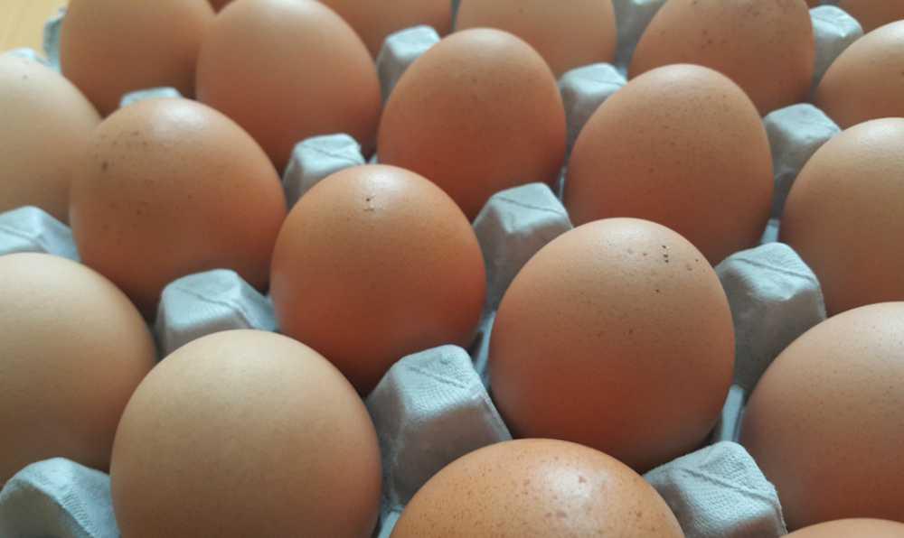 yumurta icerigi