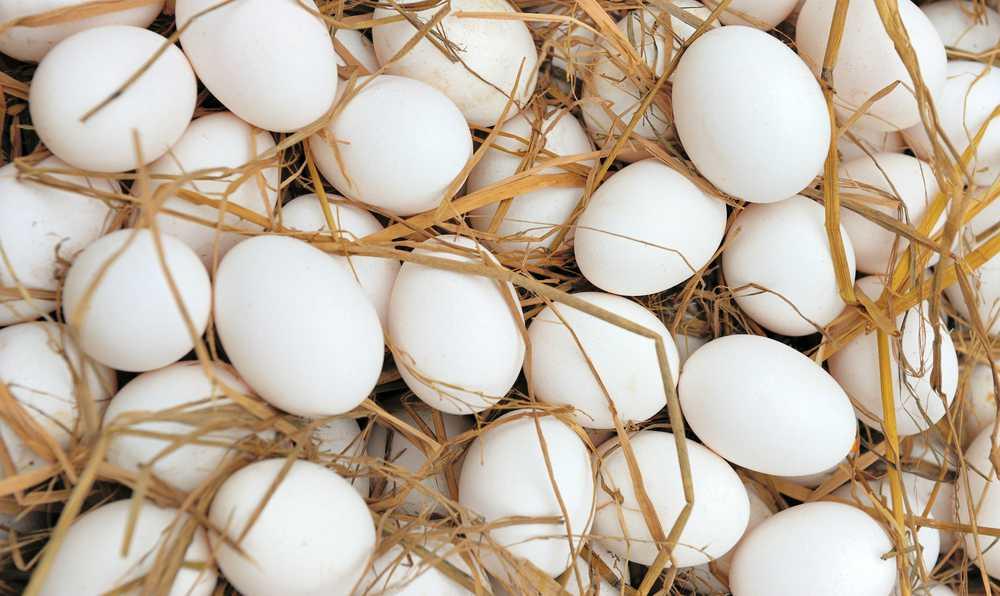 yumurta kodlari