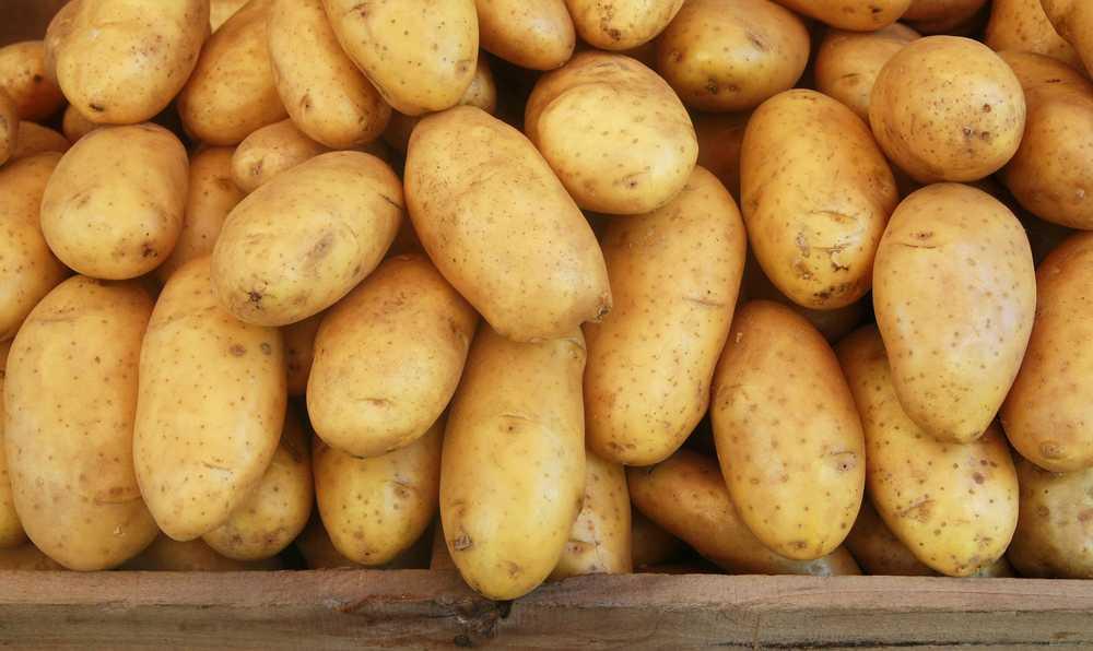 patates alirken