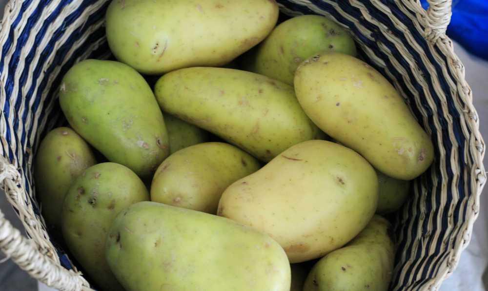 patates nasil saklanir