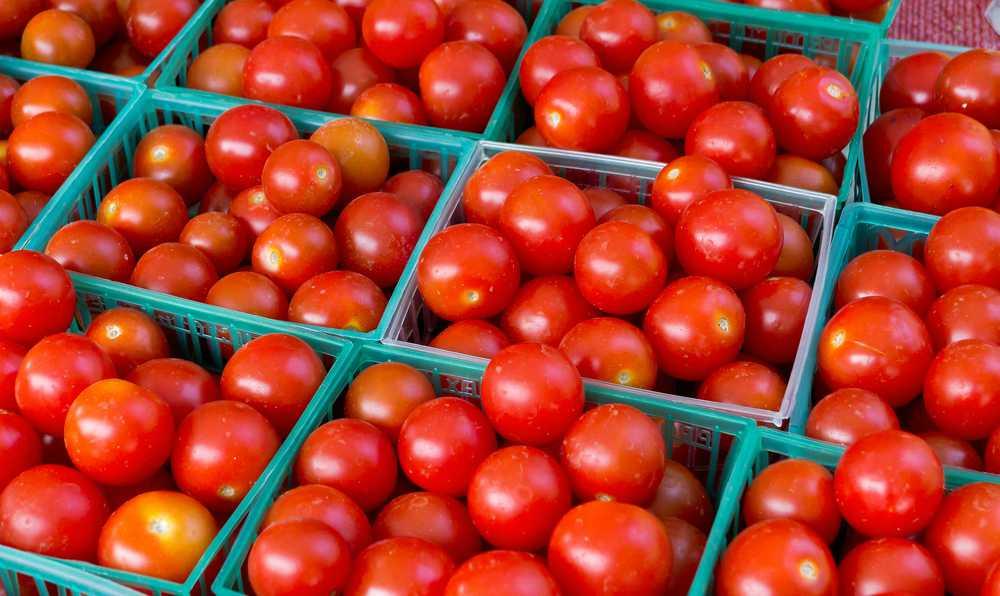 domates nasil secilir