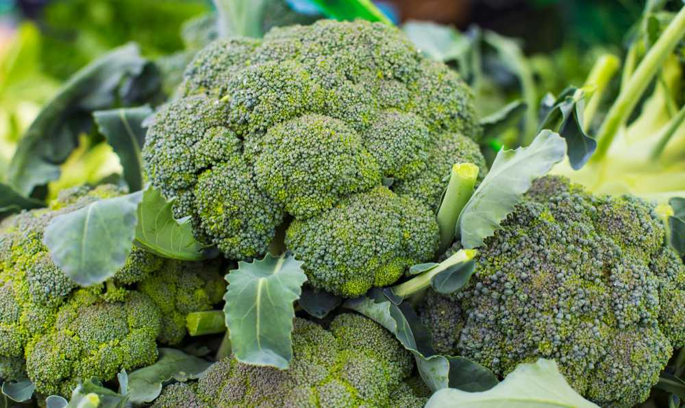 brokoli secerken