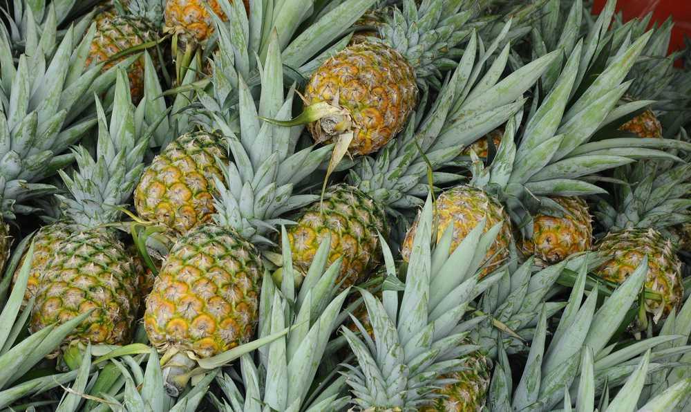 ananas faydasi