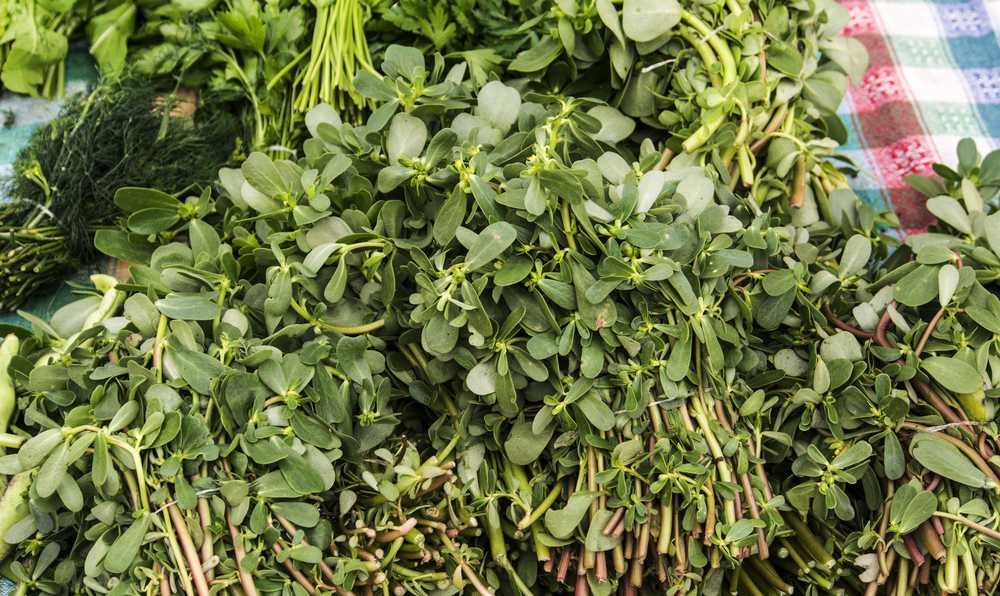 semizotu salatasi